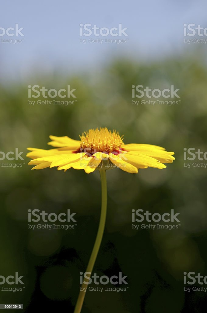 Fresh Flower royalty-free stock photo