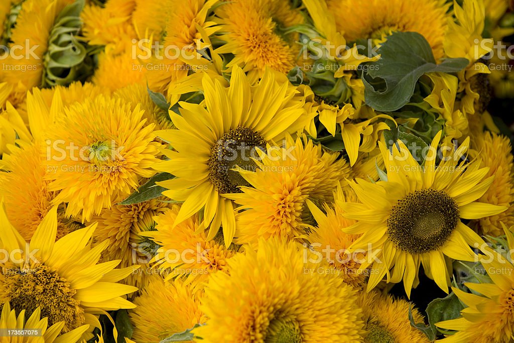 Fresh flowers at an outdoor flower market royalty-free stock photo
