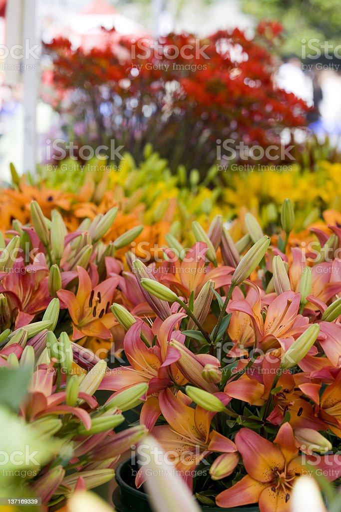 Fresh Flowers at Market royalty-free stock photo
