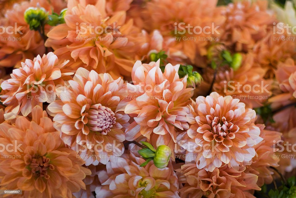 Fresh flowers royalty-free stock photo