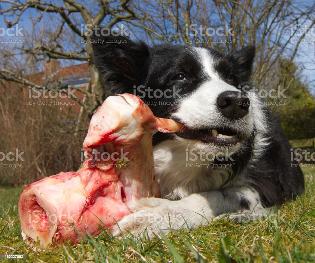 Fresh food for dogs stock photo