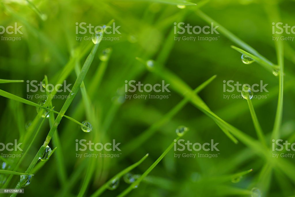 Fresh, fresh green grass stock photo