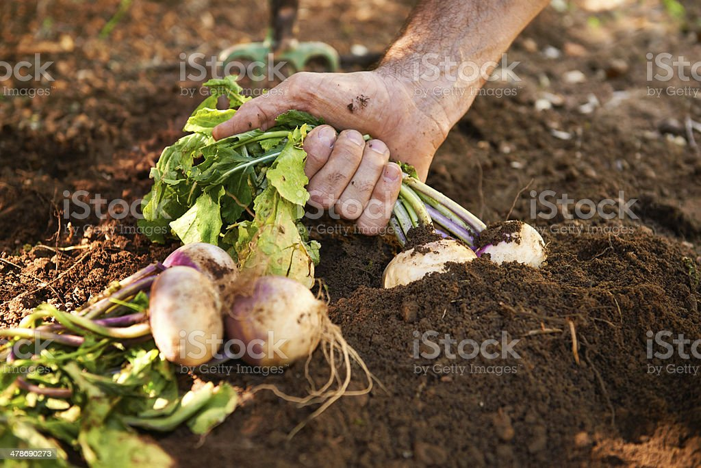 Fresh from the Earth stock photo