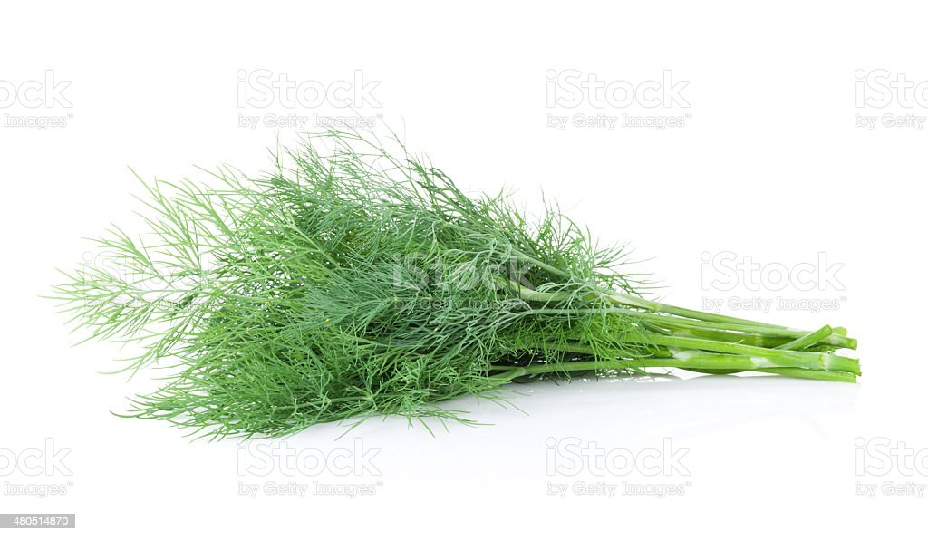 Fresh garden herbs. Dill stock photo