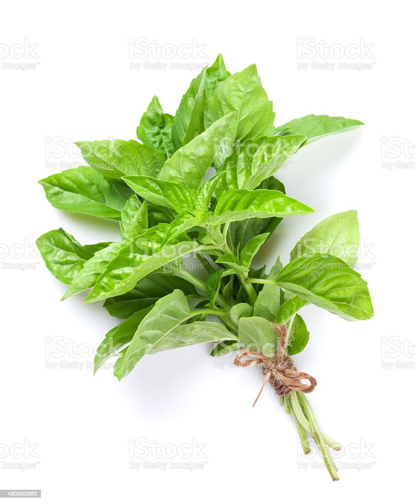 Fresh garden herbs. Green basil stock photo