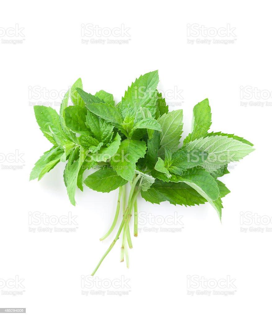 Fresh garden herbs. Mint stock photo