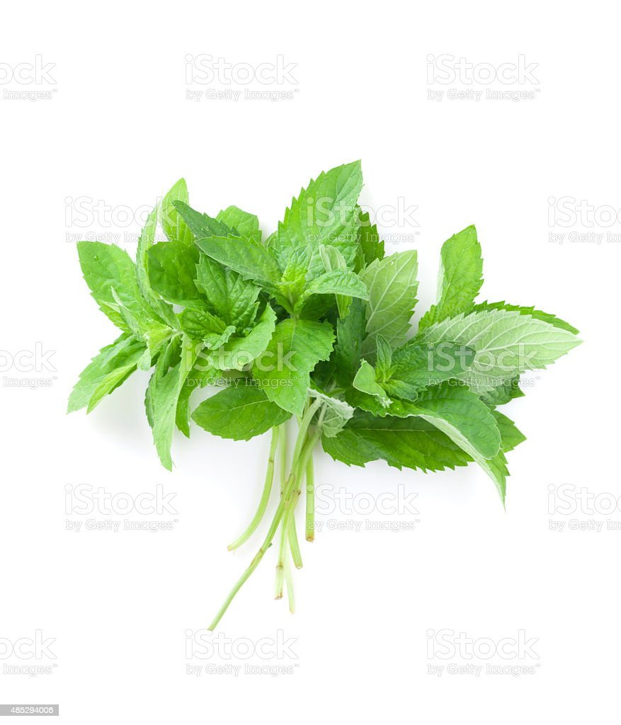 Fresh garden herbs. Mint stock photo