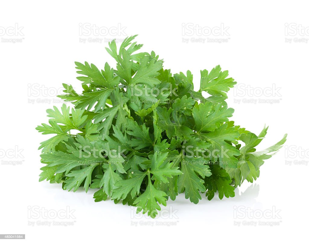 Fresh garden herbs. Parsley stock photo