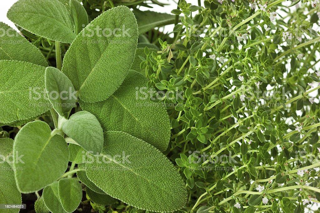 Fresh garden herbs royalty-free stock photo
