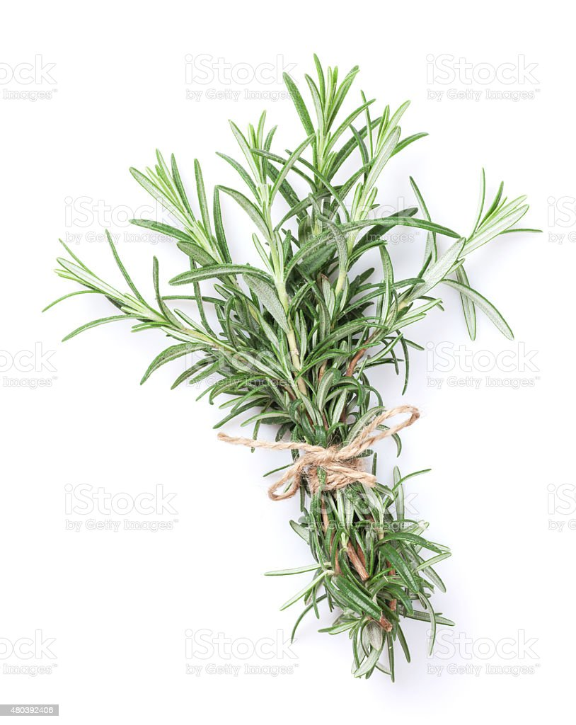 Fresh garden herbs. Rosemary stock photo