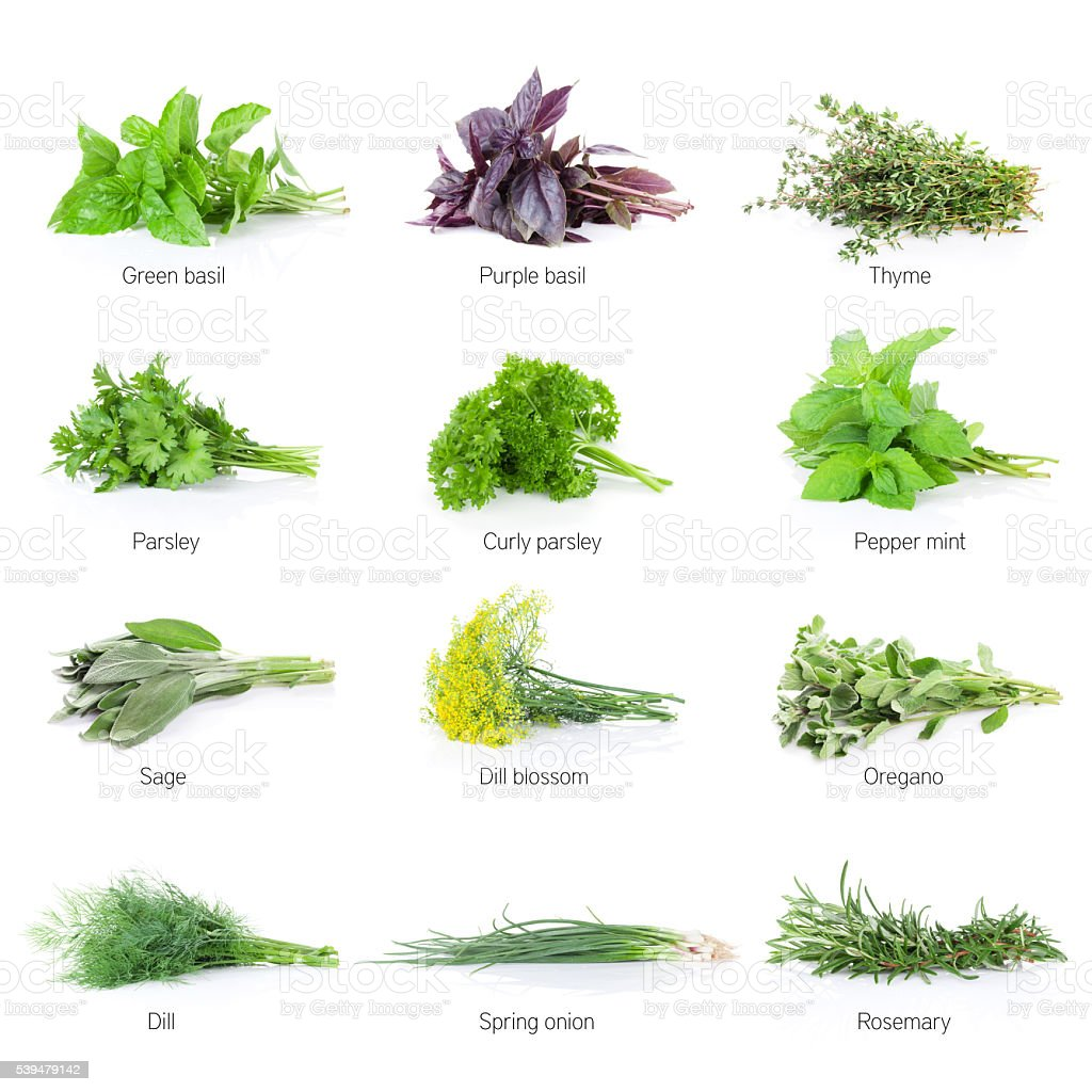 Fresh garden herbs set stock photo