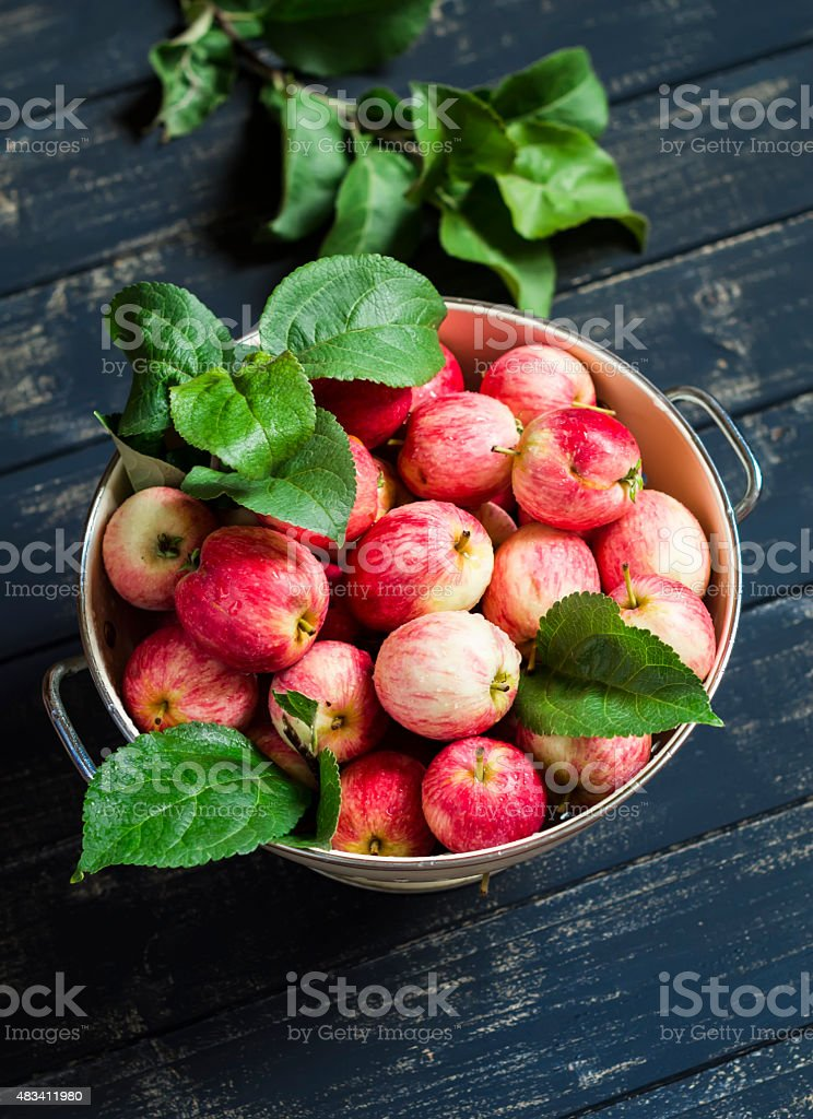 fresh garden red apples in an enamel bowl stock photo