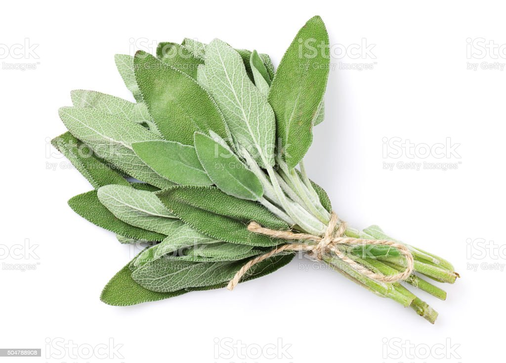 Fresh garden sage herb stock photo