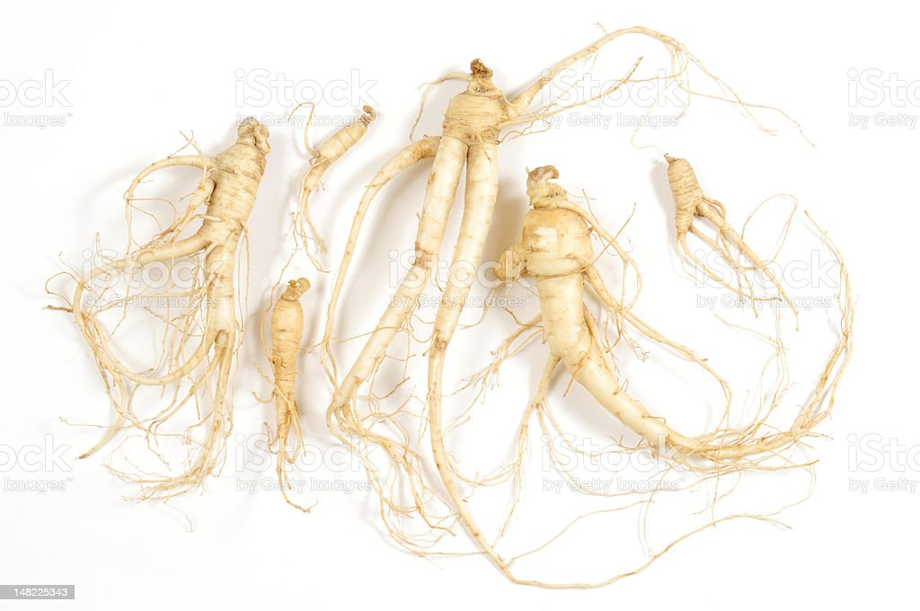 Fresh Ginseng Man Root stock photo