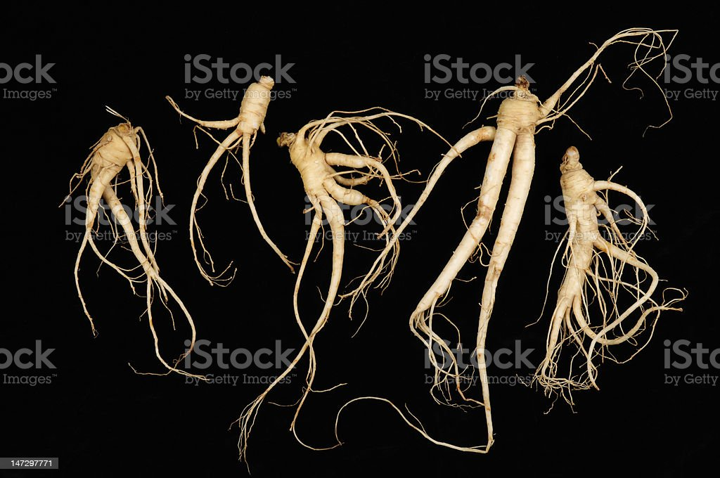 Fresh Ginseng, Man Roots royalty-free stock photo