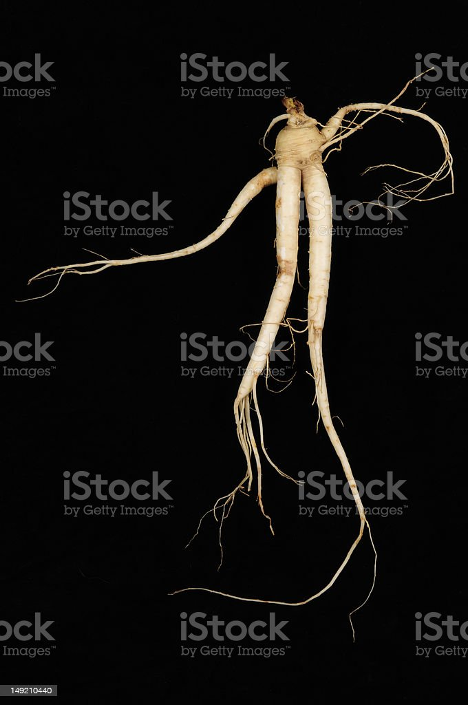 Fresh Ginseng Root stock photo