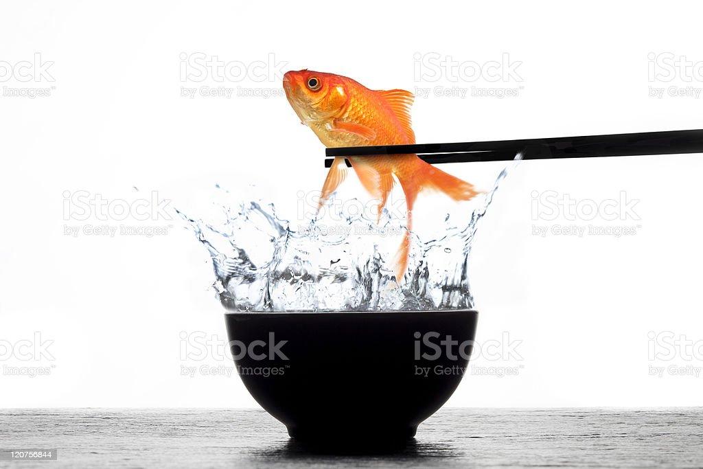 Fresh Goldfish Sushi royalty-free stock photo