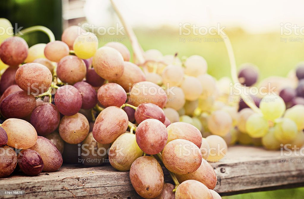 Fresh grape royalty-free stock photo