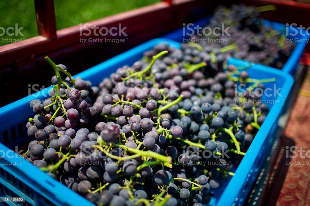 Fresh grapes at the Farmers' Market stock photo