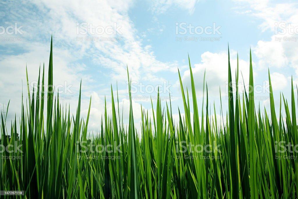 Frisches Gras field Lizenzfreies stock-foto
