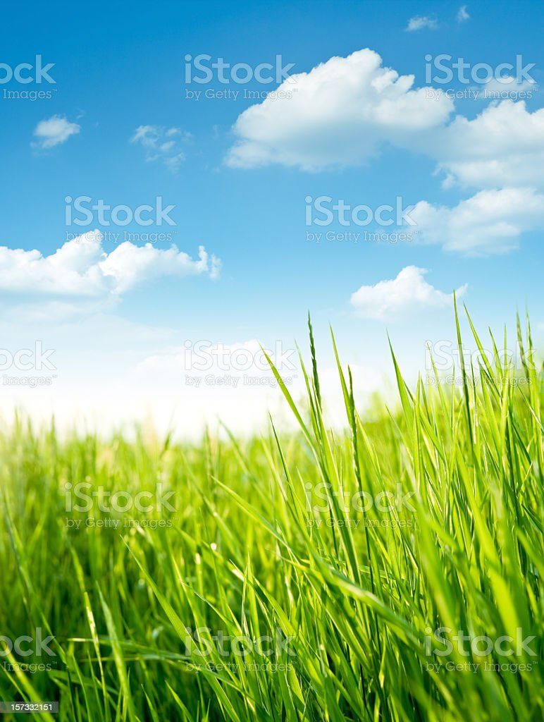 Fresh grass on meadow stock photo
