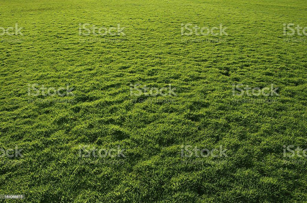 Fresh Grass royalty-free stock photo