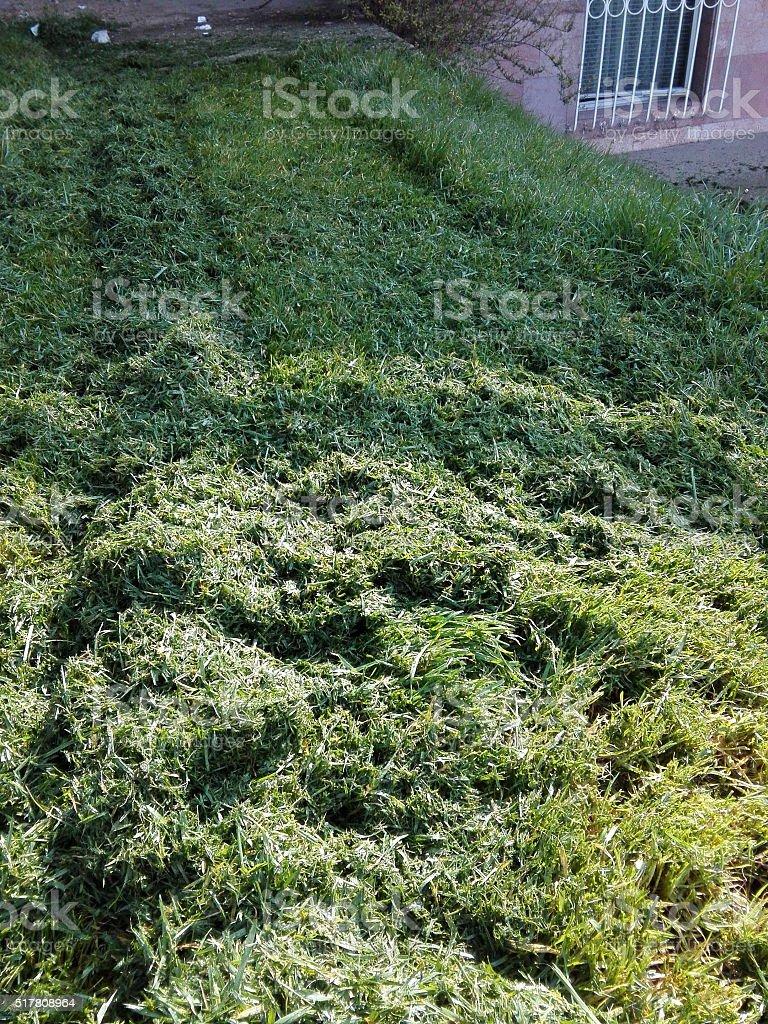 Fresh  Grass stock photo