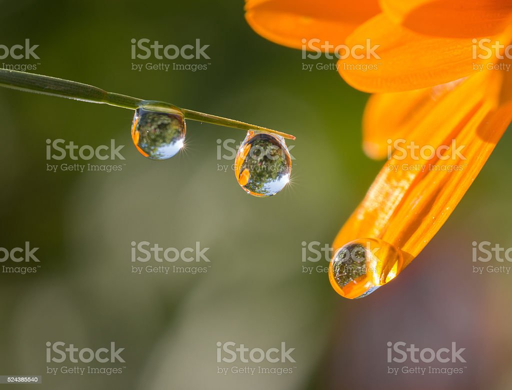 Fresh grass with dew drops and Sun beams stock photo