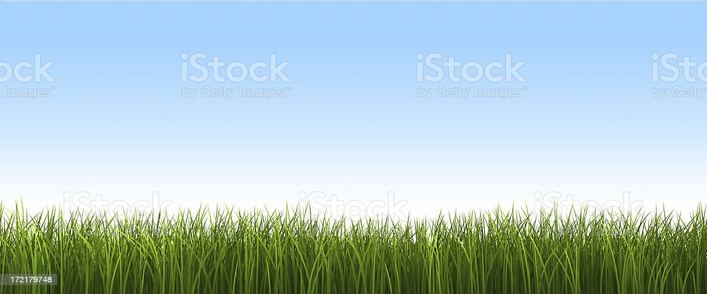 Fresh Grass with Sky royalty-free stock photo