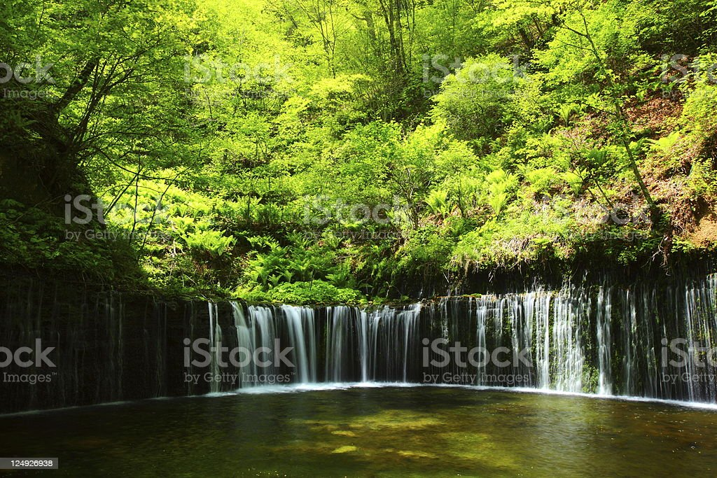 Fresh green and waterfall stock photo