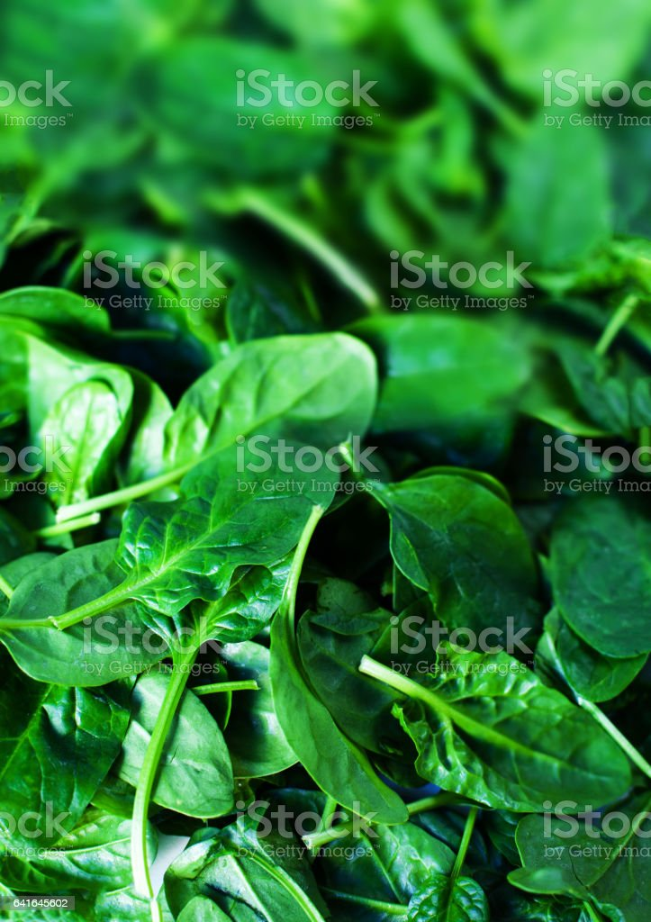 Fresh green baby spinach leaves as background close up stock photo