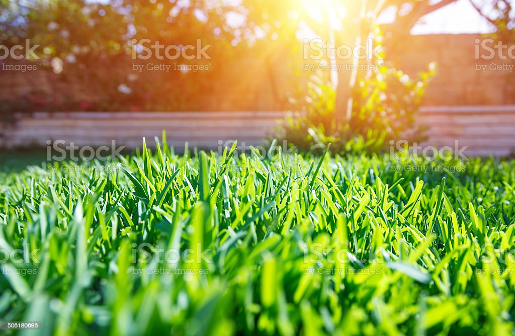 Fresh green backyard stock photo