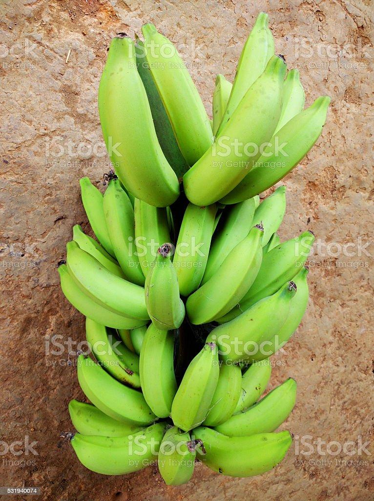 Fresh green banana stock photo