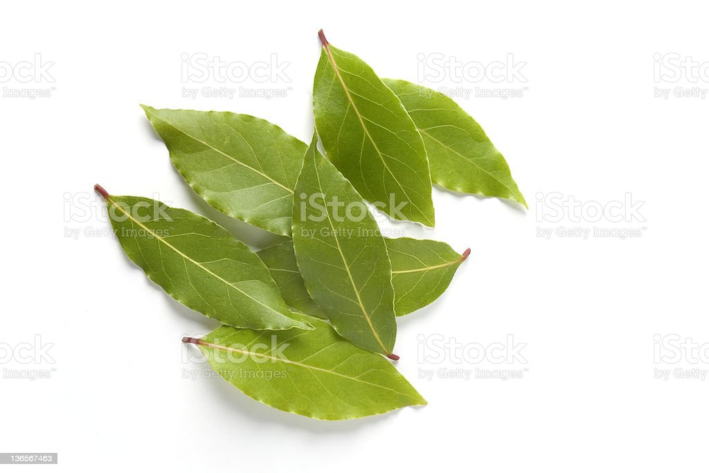 Fresh green Bay leaves stock photo