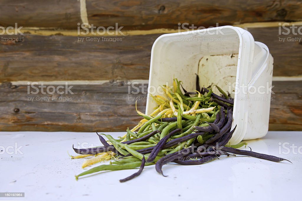 Fresh Green Bean royalty-free stock photo