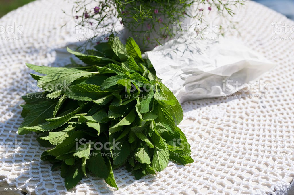 Fresh green bundle of mint in a paper packet stock photo