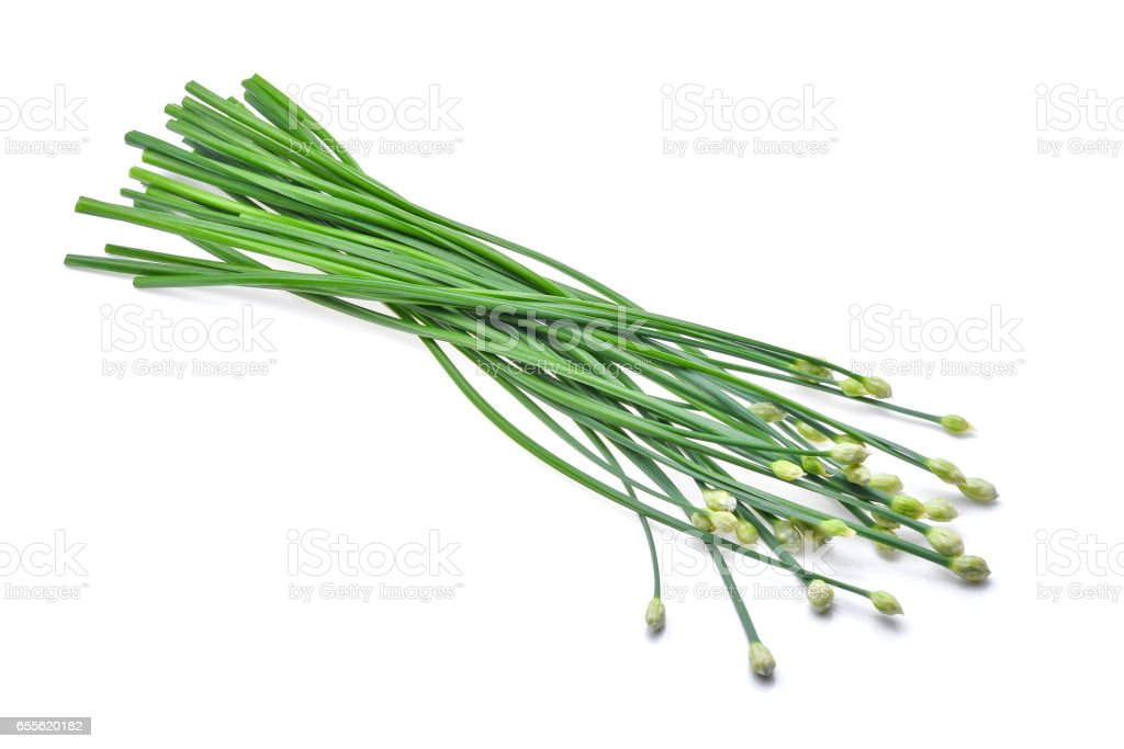 fresh green chinese chives isolated on white background stock photo