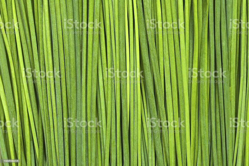 Fresh Green Chives royalty-free stock photo