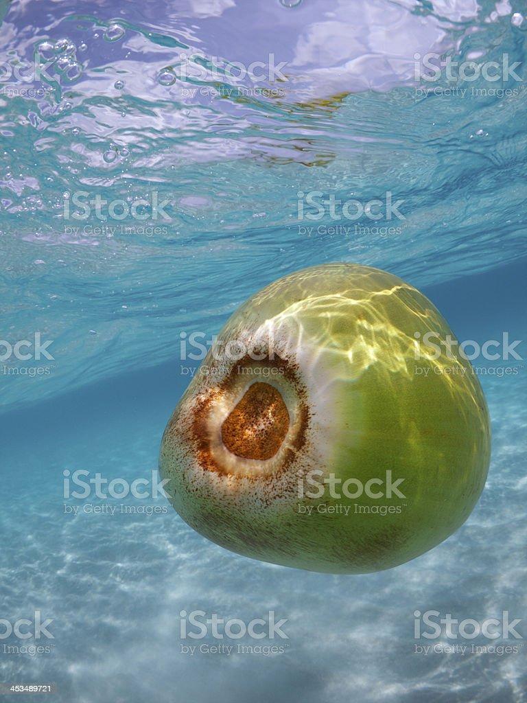 Fresh Green Coconut Floats Underwater Tropical Sea stock photo