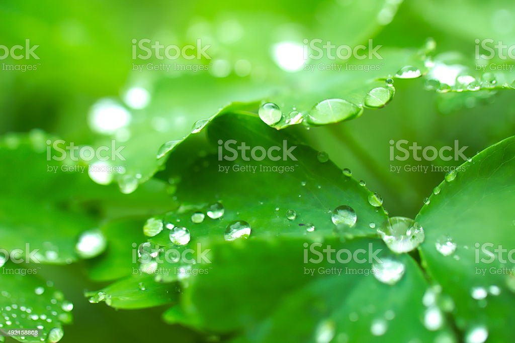 Fresh green color and water drops on plant´s leafs stock photo