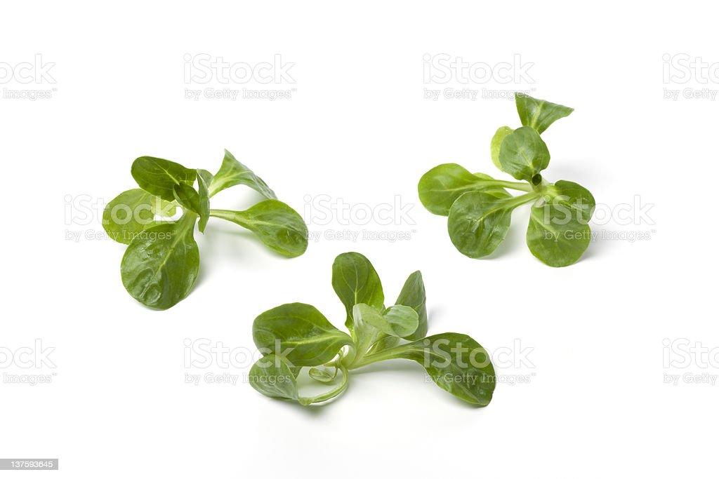 Fresh green corn salad royalty-free stock photo