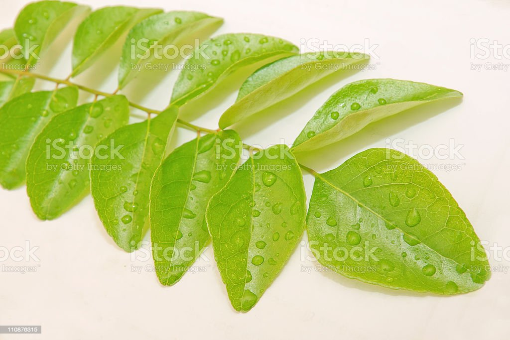 fresh green curry leaves stock photo