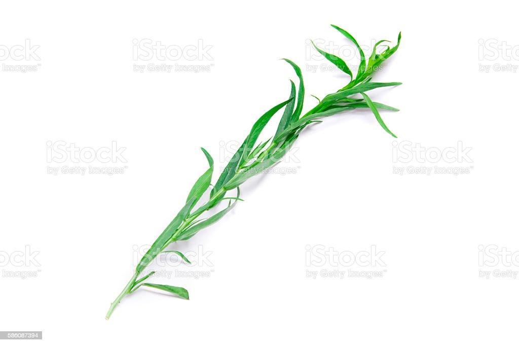 Fresh green estragon isolated on white background stock photo