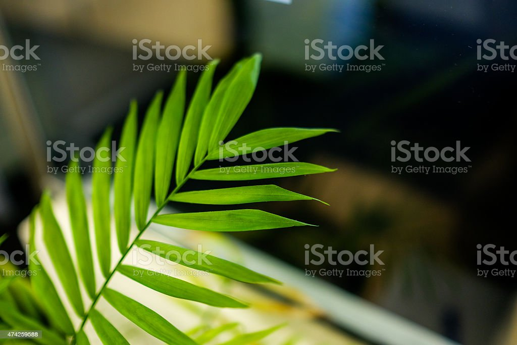 Fresh Green Fern Leaves on a glass background stock photo