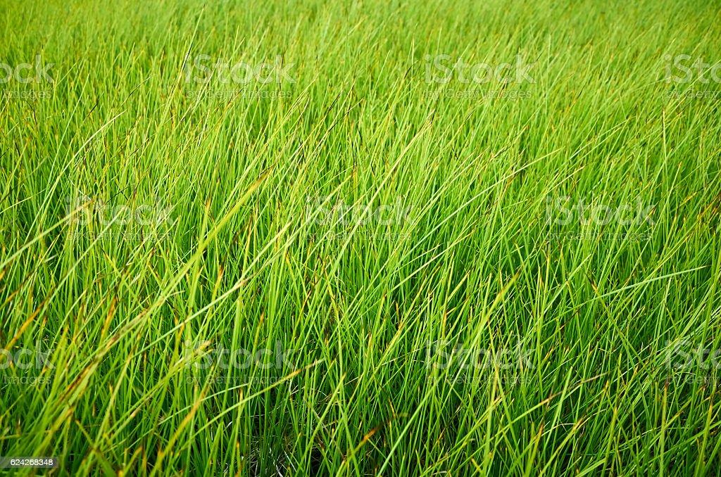 Fresh green field grass, bright day light, full frame stock photo