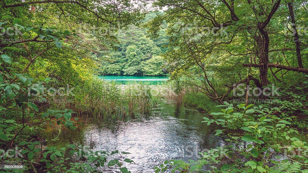 Fresh green foliage of Goshiki Pond stock photo