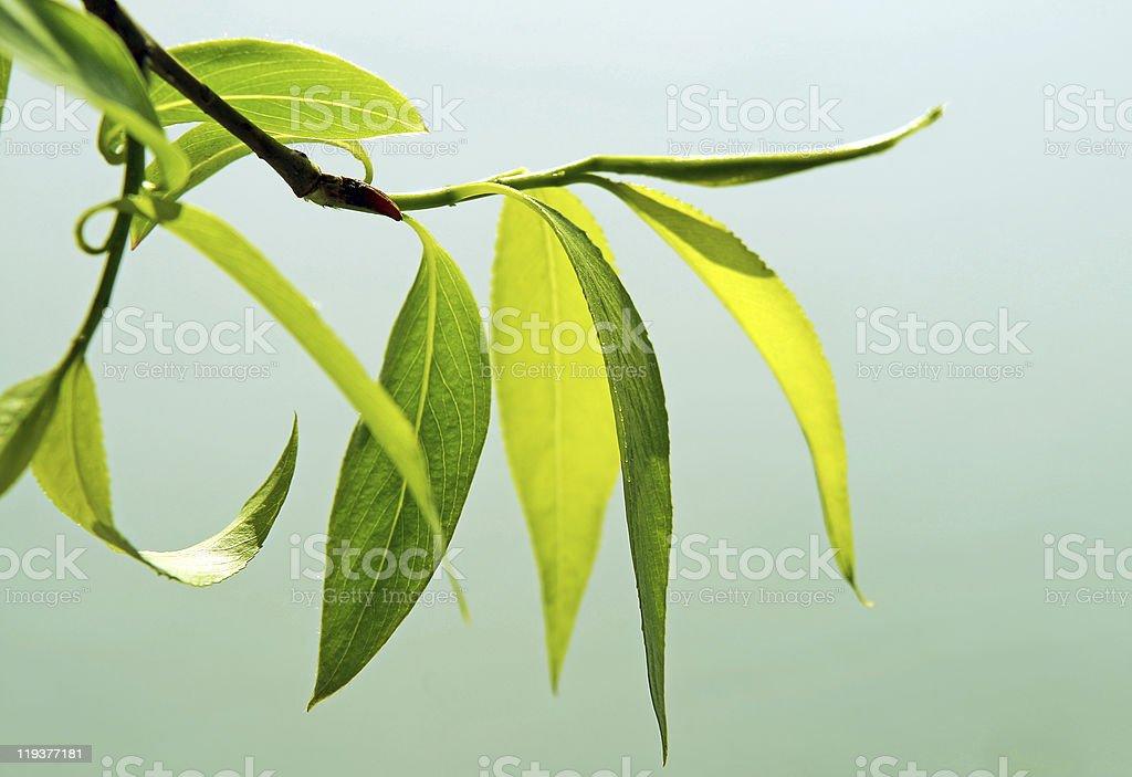 fresh green foliage stock photo