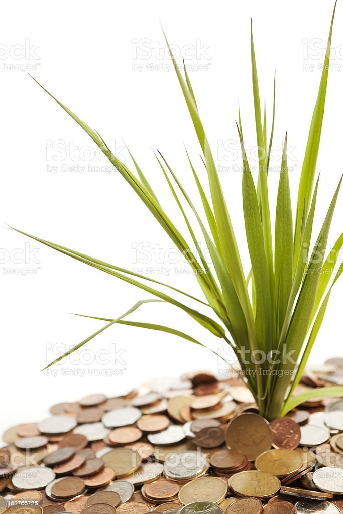 Fresh green grass and coins on white background. royalty-free stock photo
