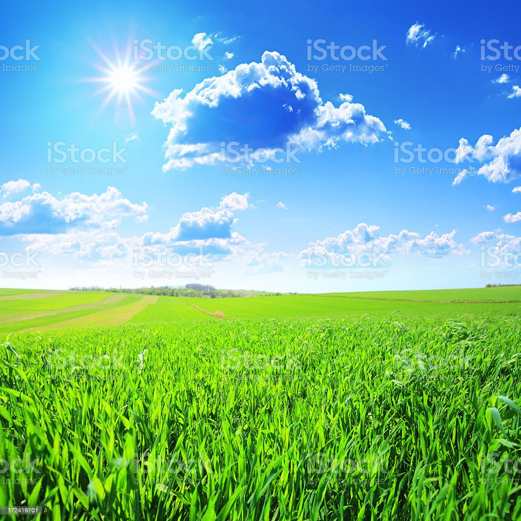 Fresh Green Grass and Sunny Sky - Spring Meadow Landscape royalty-free stock photo