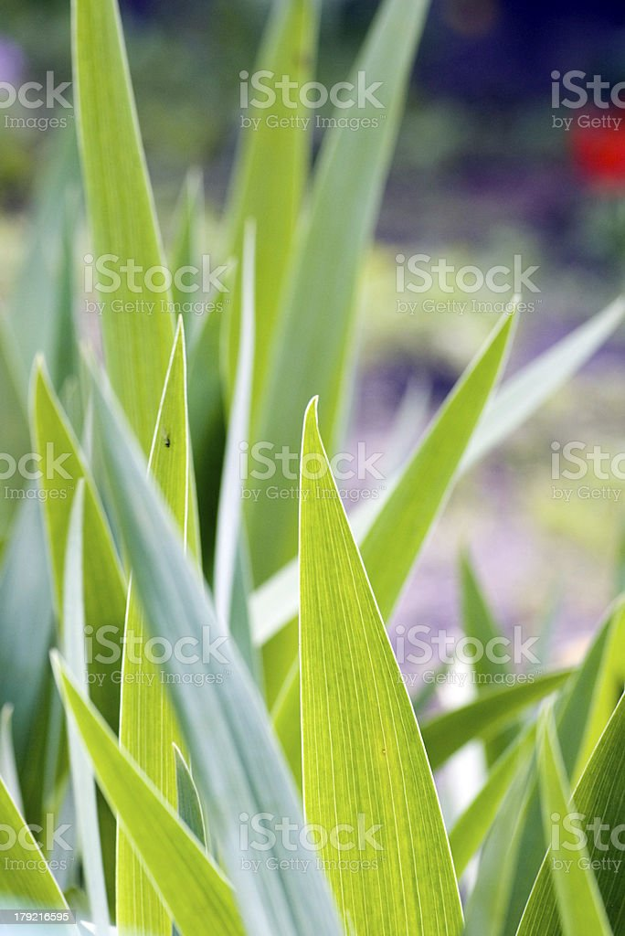 Fresh green grass (shallow DoF) royalty-free stock photo